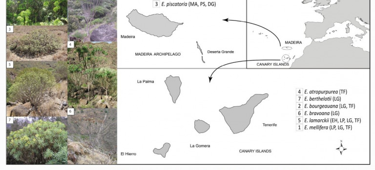 The importance of threatened host plants for arthropod diversity: the fauna associated with dendroid Euphorbia plants endemic to the Canary and Madeira archipelagos