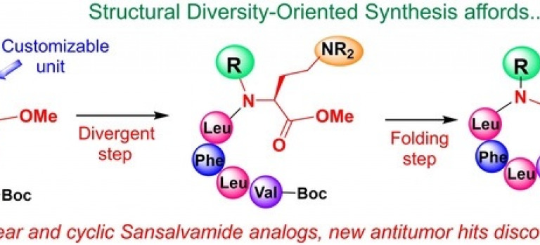 Synthesis of Sansalvamide‐Related Antitumoral Peptides